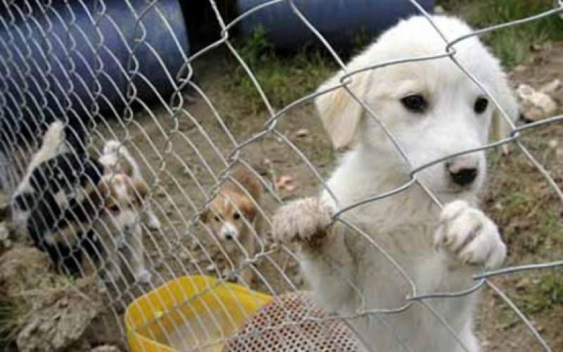 Adalar Belediyesi Hayvan Barınağı hayırseverlerden ilgi bekliyor!
