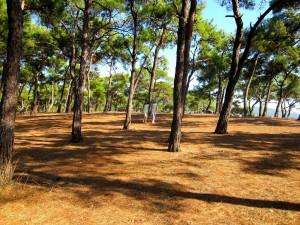 Büyükada Dilburnu piknik alanı