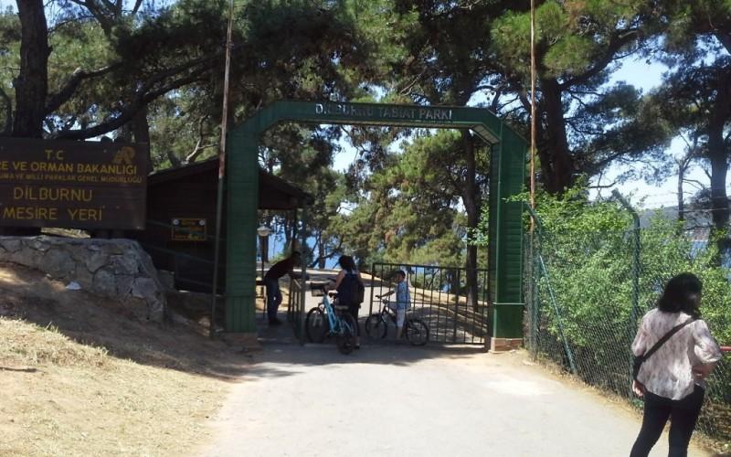 Büyükada – Dilburnu Piknik Alanı