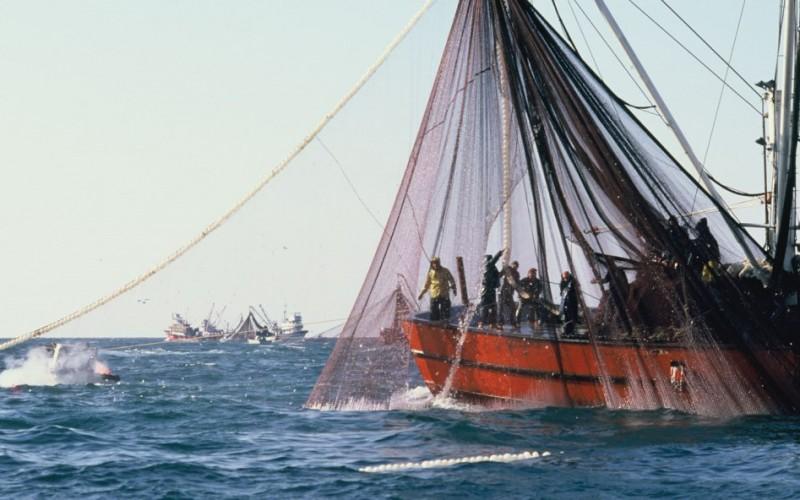 İstanbul Adalar ve Çevresinde Gırgırla Balık Avı