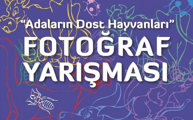 ' Adaların Dost Hayvanları ' Fotoğraf Yarışması Başladı!