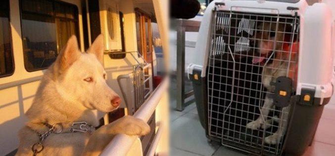 Şehir Hatları Vapurları Evcil Hayvan Taşıma Kuralları
