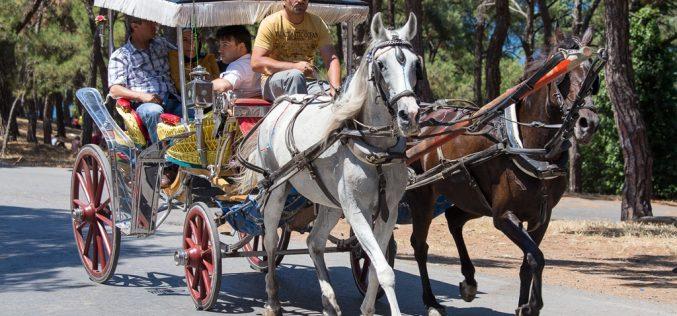 Adaların Atları Tehdit Altında mı? Ruam Hastalığı Hakkında Bilmeniz Gerekenler